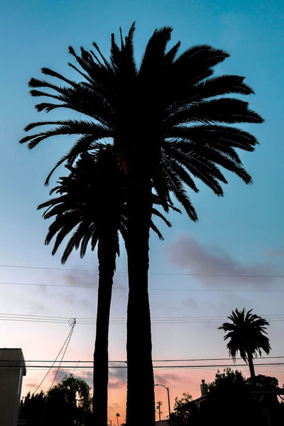 Palm Tree Sunsets Colorful California Tree Palm Tree Silhouette Sunset Sky Dramatic Sky Outline