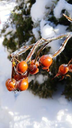 Frozen Nature