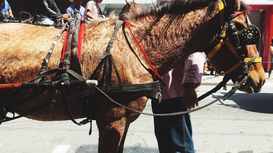 Festa EyeEm Selects Sunlight Real People Day Nature Lifestyles Men People Incidental People Occupation Domestic Animals Mode Of Transportation City