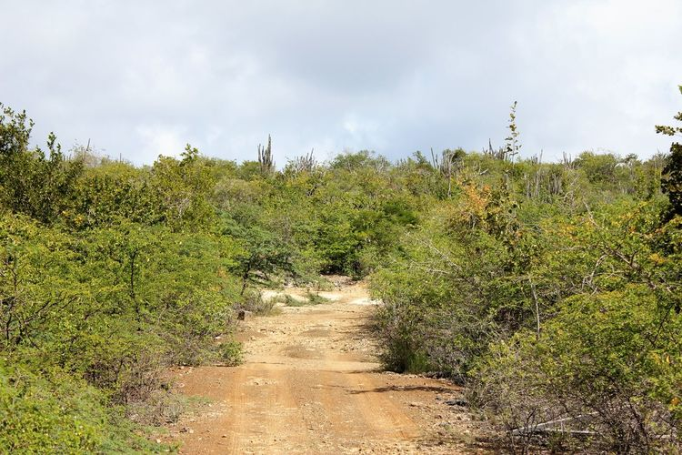 Bonaire Landscape with Bushes and Cacti Cacti Caribbean Island Shrubs Beauty In Nature Bonaire Landscape Bushes With Fresh Green Leaves Caribbean Island Flora Cloud - Sky Day Growth Landscape Nature No People Outdoors Plant Scenics Sky The Way Forward Tranquil Scene Tranquility Travel Destinations Tree