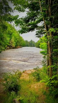 Upper Peninsula Michigan Tahquamenon River SummerTahqamenon Falls State Park