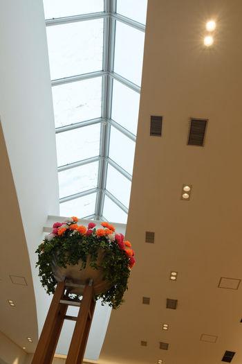 FUJIFILM X-T2 Japan Japan Photography Architecture Built Structure Flower Fujifilm Fujifilm_xseries Indoors  Makuhari Window X-t2 千葉 千葉市 幕張