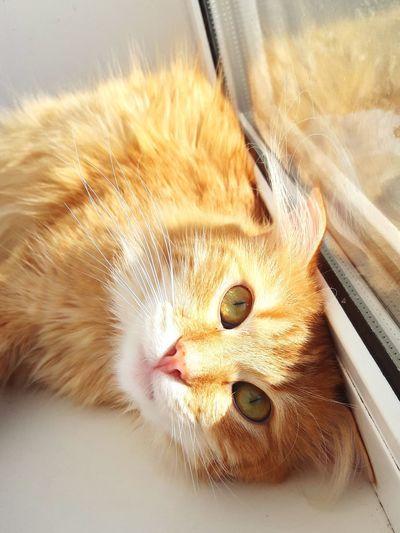 Кот Лёва Cat