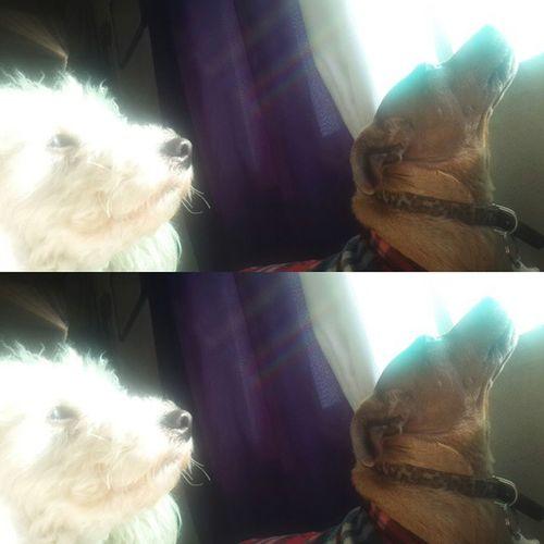 Chuli Avril Instadog Instapet dog