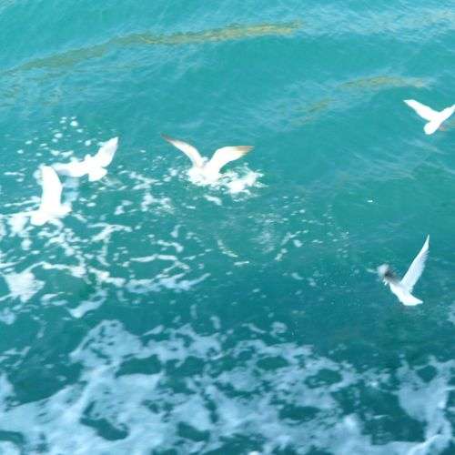 Yeosu Koreatrip Sea Blue Seegull Fly Fresh Breathe Rest Enjoying Life