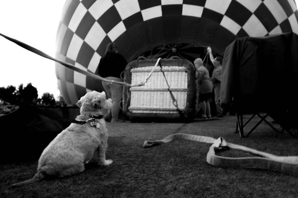 Dog's eye view. Insideview Upcloseandpersonal Tucson Az Liftoff Preparation  Capture The Moment Living And Learning Winterfest Outdoor Photography Thephotographer Upupandaway Adventures Eye4photography  Arizona Tubac Photography Myperspective Artistsmind Nightphotography Toto Showcase: November Bottomview Bucketlist B&w Street Photography Fine Art Photography Go Higher