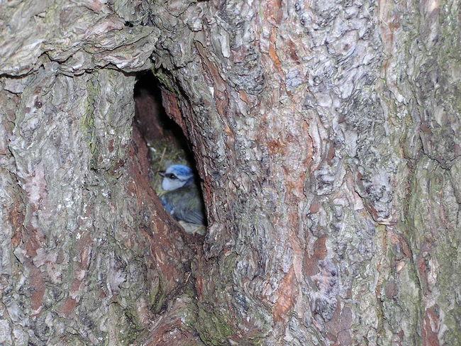 Bird Hidden Beauty In Nature Nature Pimpelmees Tree