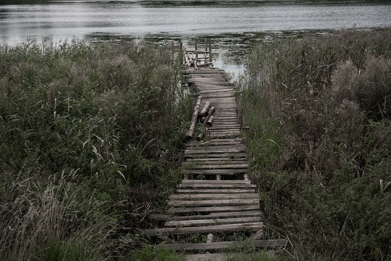 Footpath Grass Plant Beauty In Nature Day Grass Lake Lake View Nature No People Old Old Footbridge Outdoors Sky Staircase Steps Steps And Staircases Tranquility Water Wood - Material Wood Paneling Wooden Wooden Footbridge Wooden Pathway Wooden Texture The Week On EyeEm