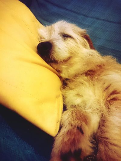 One Animal Pets Mammal Dog Domestic Animals No People Inlovewiththis Inthemoment Indoors  Smiling Dreaming Away Happy Doggy Dogs Of EyeEm Doglife Dog Photography Dogoftheday