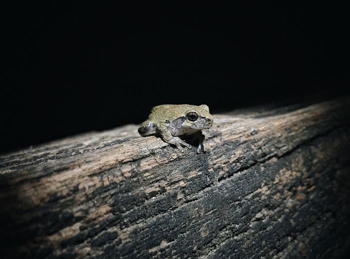 Close-Up Of Frog On Wood At Night