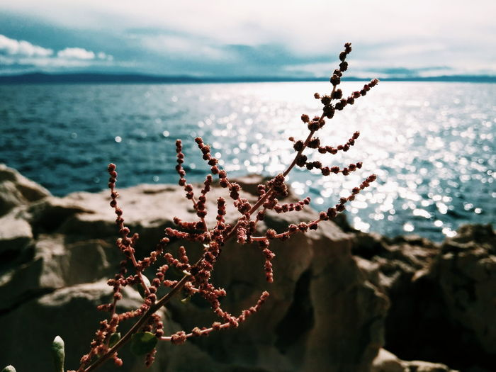 Sea Flower Nature Sky No People Water Outdoors Beauty In Nature Day Landscape Horizon Over Water Close-up Flower Head Xiaomi foreground focus EyeEmNewHere Perspectives On Nature
