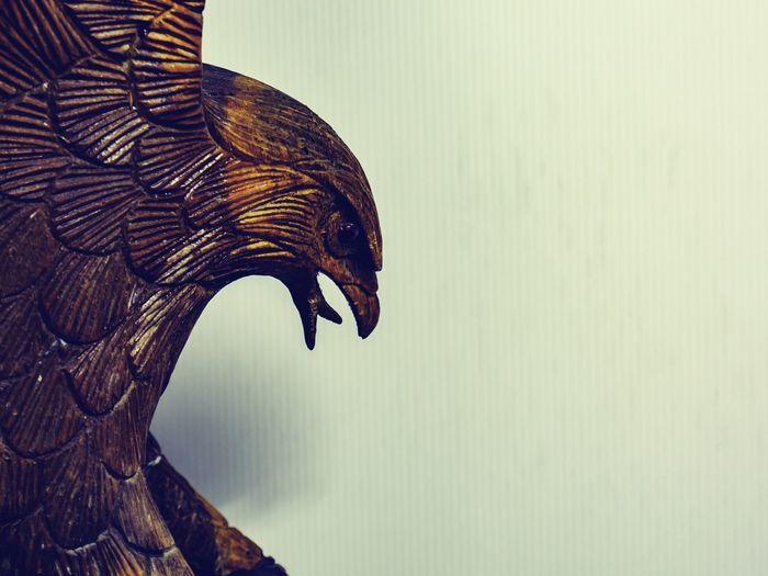 Wood Hawk