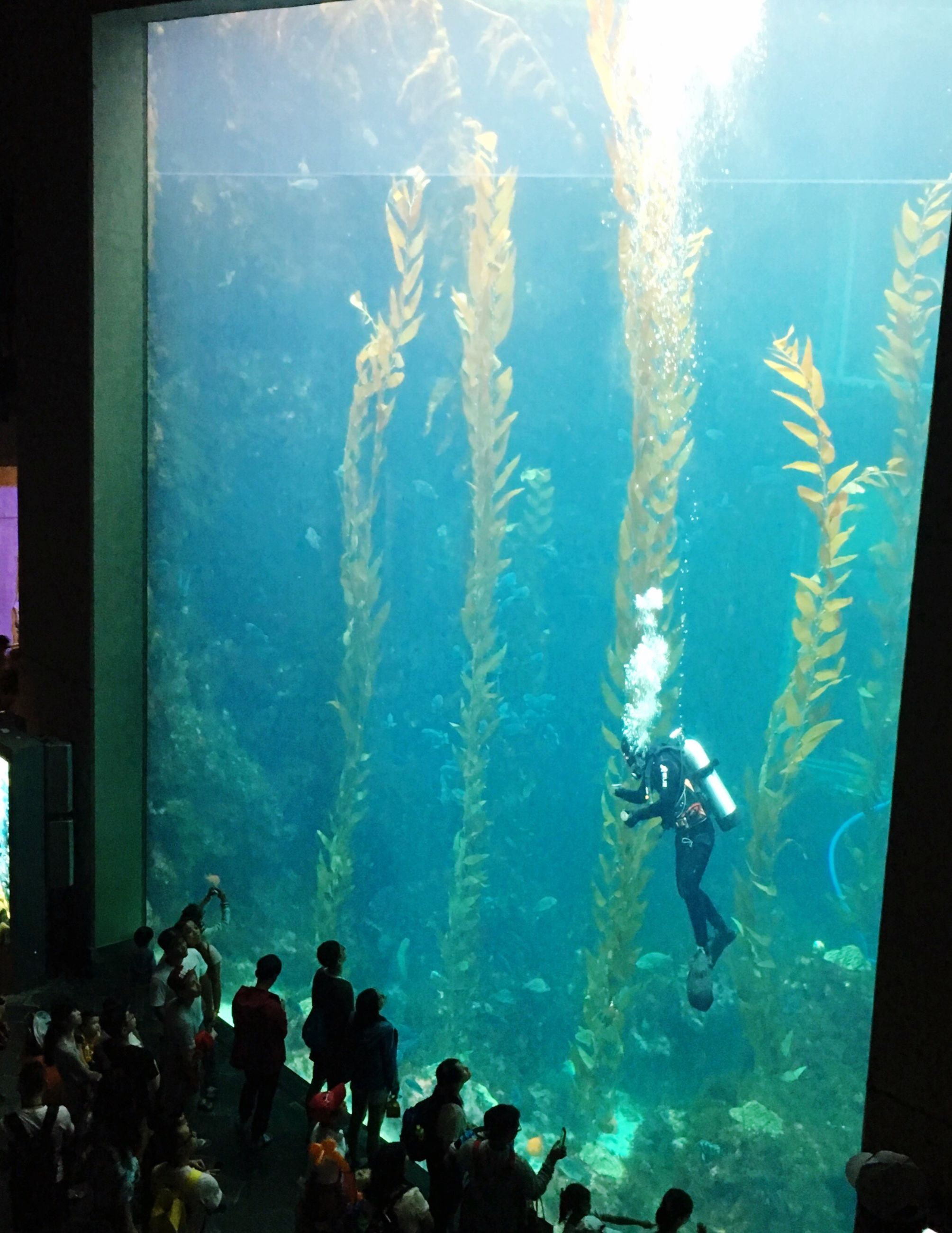 indoors, water, large group of people, watching, swimming, transparent, togetherness, aquarium, person, exploration, blue, enjoyment, tourism, weekend activities, vacations, adventure
