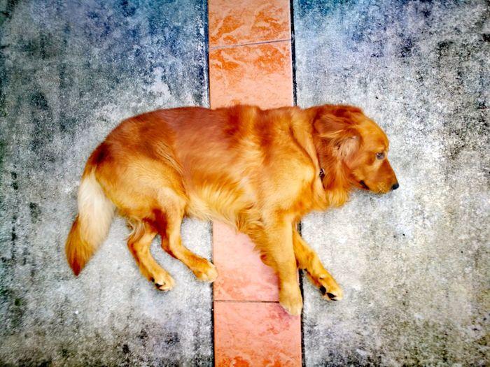 Animal,dog,