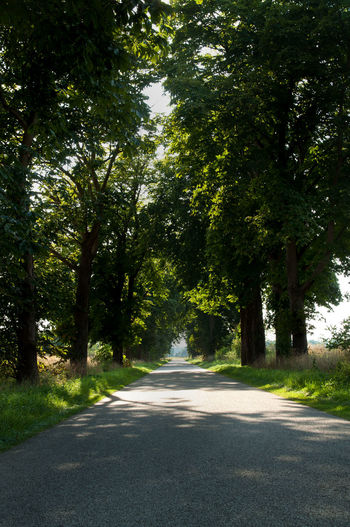 On The Road The Road Ahead Light Trees Road Abandoned Light At The End Of The Tunnel Landscape Landscape_Collection