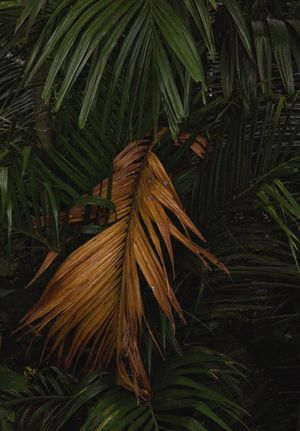 Palm Tree Leaf Green Color Growth No People Nature Plant Outdoors Frond Day Close-up Beauty In Nature Tree Freshness