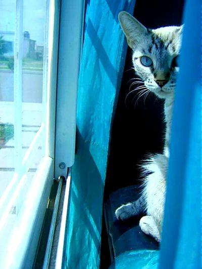 Luna♡ Cat♡ Serouisly