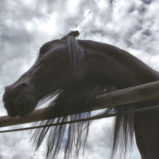 Horse Life I Love Horses Horses My Horse Horse Riding Horse Domestic Animals Horse Photography