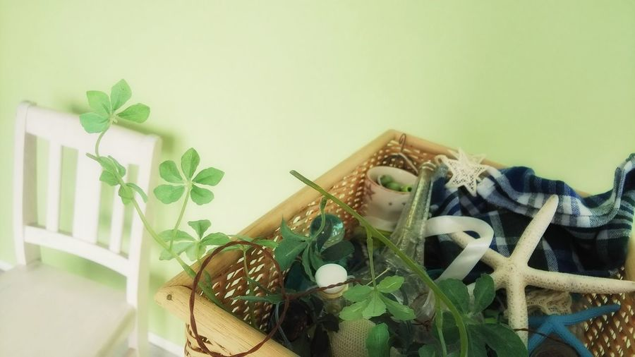 Close-up of potted plants in basket at home