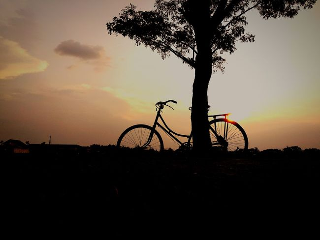 gowes dulu harus😁😁😁😁😎😎😂 #bicycle #tree #sky #sun Tree Tree Area Sunset Bicycle Silhouette Beach Sea Cycling Mountain Bike Back Lit Atmospheric Mood Dramatic Sky Forked Lightning Romantic Sky Lightning Atmosphere Storm Cloud Cloudscape Bicycle Rack Cumulus Moody Sky Dramatic Landscape Thunderstorm Sky Only