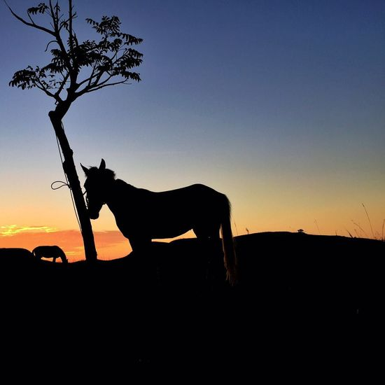 Afternoon Afternoon Sky Animals Animals In The Wild Beautiful Beautiful Nature Horse IPhoneography Sumba Timur Sunset Sunset Silhouettes