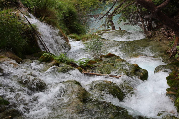 Croatia Djmarcop Trip Beauty In Nature Tranquil Scene No People Scenics Tranquility Outdoors Waterfall Motion Forest Nature Day Water