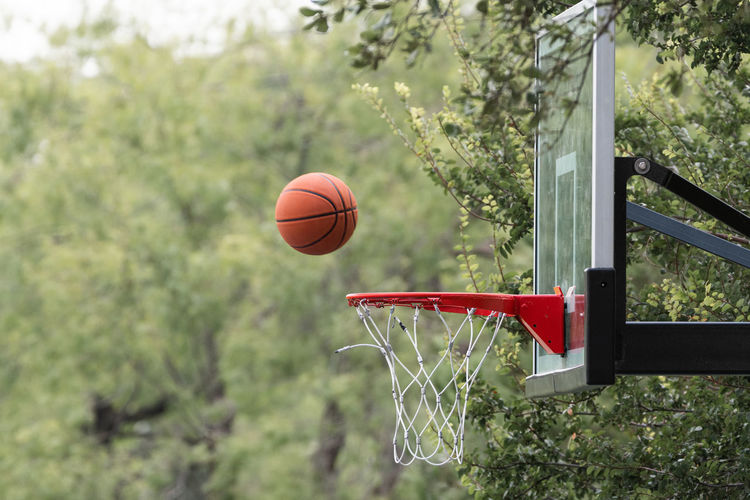 View of basketball by hoop against tree
