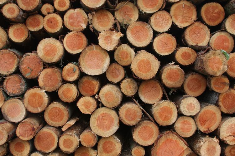 Abundance Backgrounds Close-up Cross Section Deforestation Environmental Issues Firewood Forestry Industry Fossil Fuel Fuel And Power Generation Full Frame Heap Large Group Of Objects Log Lumber Industry Nature No People Pattern Repetition Stack Timber Tree Ring Wood Wood - Material Woodpile