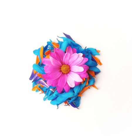 Multi Colored Blue Flower No People Flower Head Variation Pink Flower Abstract EyeEm Best Shots Gerbera Daisy Backgrounds Modern White Background Freshness Pink Color Studio Shot Purple Sparse Layered Colors Beauty
