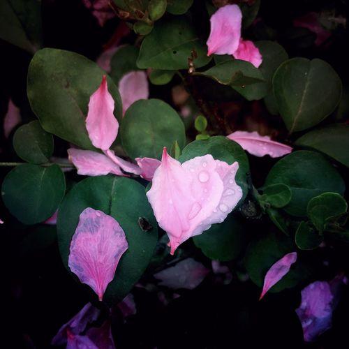 Hello World Enjoying Life Traveling EyeEm Nature Beautiful Colors Flowers Pink Flower Pink pink