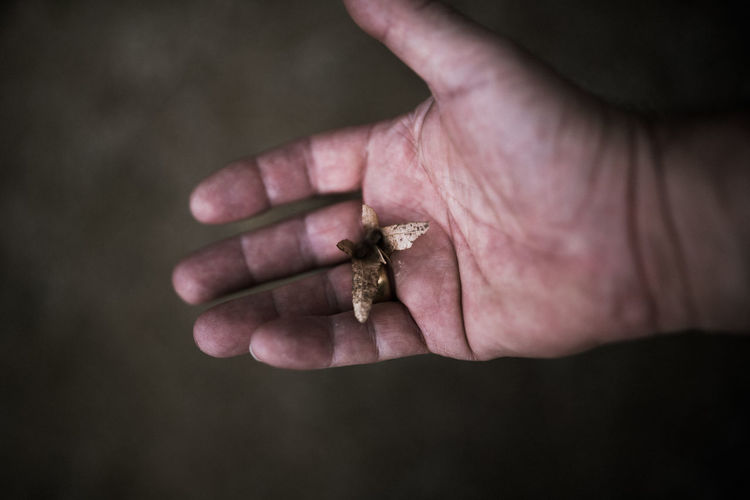 Hoffi99 Plate Leaves Leaf In Hand Human Hand Hand Human Body Part Close-up One Person Holding Selective Focus Body Part Focus On Foreground Day High Angle View Men One Animal Outdoors Adult Jewelry
