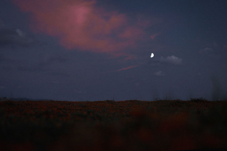 Sky Beauty In Nature Cloud - Sky Moon Tranquility Night Tranquil Scene Scenics - Nature Nature Environment No People Landscape Land Field Space Outdoors Astronomy Plant Non-urban Scene Idyllic Moonlight