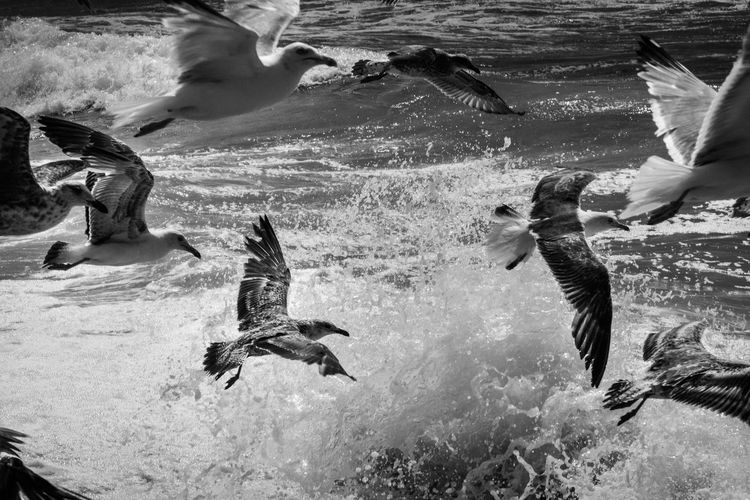 Side view of birds flying over water