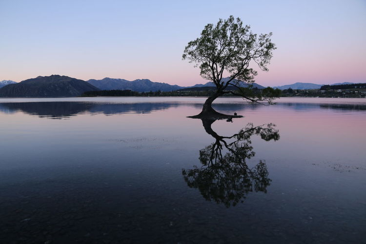 Mountains Mountains And Sky Nature New Zealand New Zealand Scenery Night Nightsky Stars Stones Stones & Water Sunset Sunset_collection Tree Tree_collection  Wanaka Wanaka Tree Water Water Reflections Water_collection Waterfront