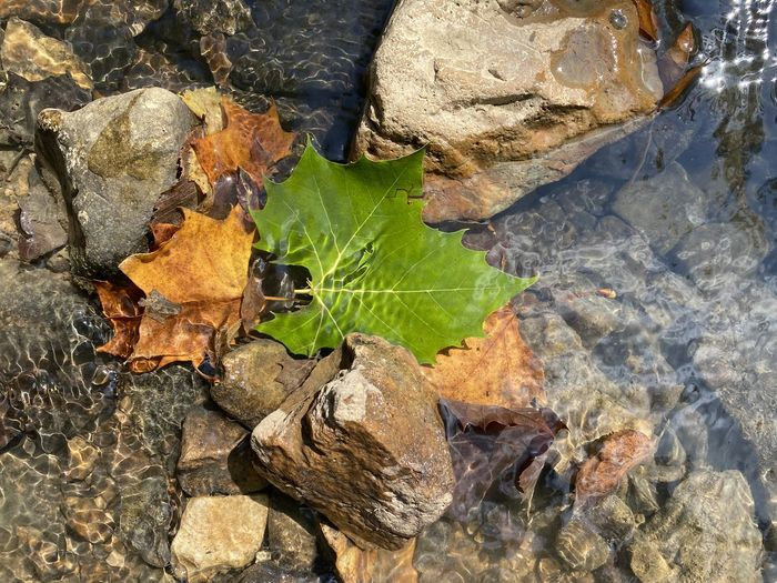 High angle view of leaves on rock by lake