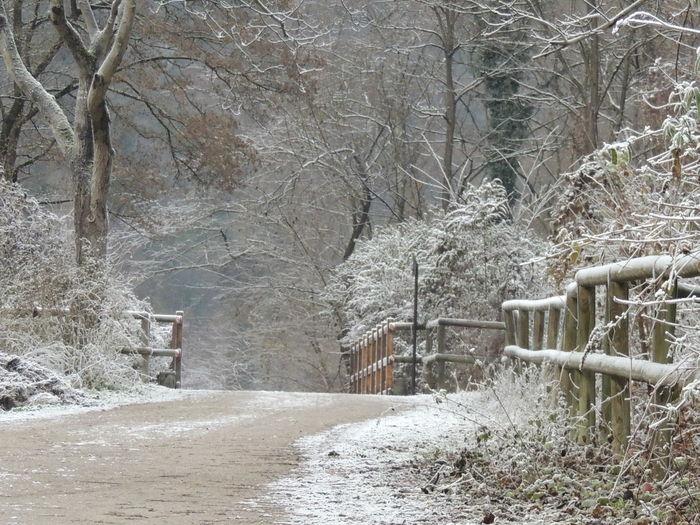 Cold Days Cold Temperature Cold Winter ❄⛄ Frozen Frozen Nature Winter Winter Trees Winter_collection Winterscapes Wintertime Winterwonderland