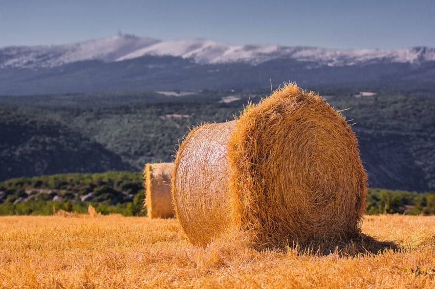 Hot summer in Provence Composition Hay Bale Hot Summer Day Provence Wheat Field Bale  Beauty In Nature Contrast Foreground Focus Harvest Hay Hay Bale Hay Bales Haystack Landscape Light And Shadow Mont Ventoux Mountains Outdoors Scenics South Of France Summer Sunlight Tranquil Scene Yellow Breathing Space