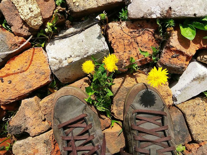 Day Outdoors Backgrounds Sunlight High Angle View Yellow Flower Dandelion Dandelion Seed Summertime Live For The Story Plant Floor Blooming Sneakers Sneakers ♥ Standing Fashion Human Leg Low Section Brickstones Out Of The Box Shoes Stone Bricks Retro Paint The Town Yellow My Best Photo Springtime Decadence
