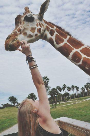 Woman Reaching Giraffe Against Sky