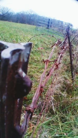 Outdoors Rusty Metal Barbedwirefence Fencepost