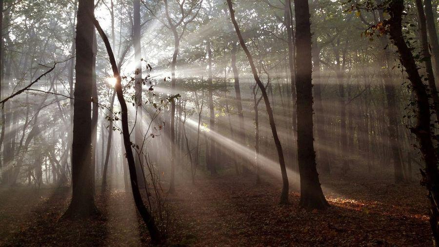 Glitch Arbre Arbres Foret Ombres Et Lumières Soleil