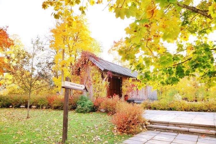 Autumn colors Autumn Leaves Autumn Yellow Landscape Landscape_Collection Tree Shelter Architecture Sky Building Exterior Built Structure