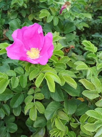 Leaf Plant Nature Growth Flower Green Color Pink Color Petal No People Fragility Outdoors Beauty In Nature Day Freshness Close-up Flower Head