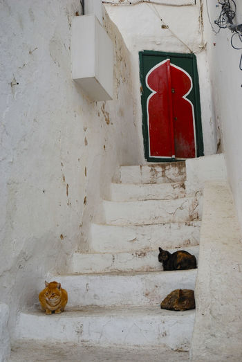 Tunis Red Architecture No People Built Structure Wall - Building Feature Door Entrance Building Day White Color Building Exterior Outdoors Staircase Security Wall White Domestic Protection Pets Tunis Rosafrancomendoza Nikonphotography Adobe Photoshop Travel Photography Nikon