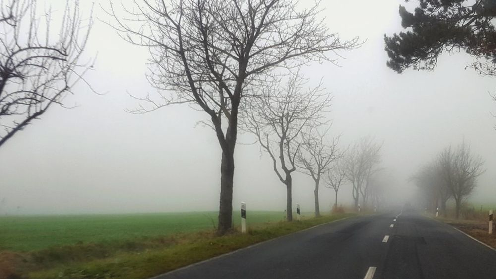 Onmywaytowork Nebel Herbst Foggy Autumn Fog Road Tree Landscape Outdoors Bare Tree Rural Scene The Way Forward Tranquility Beauty In Nature Day Nature No People