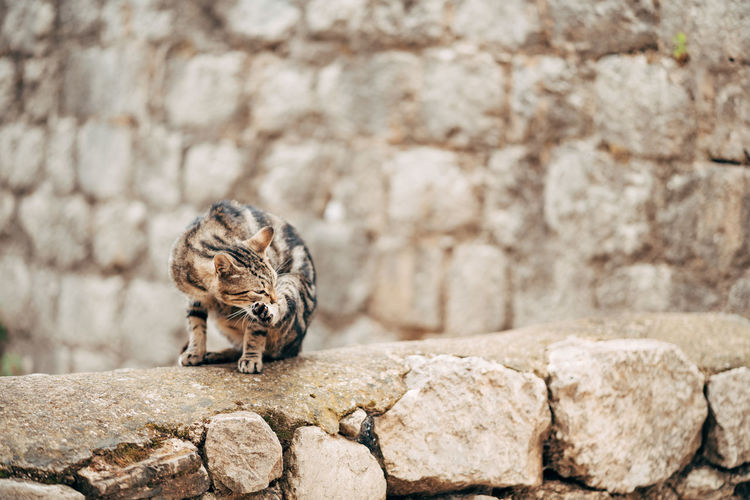 Close-up of a cat on wall
