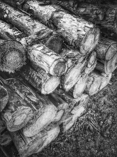 Log Tree Timber