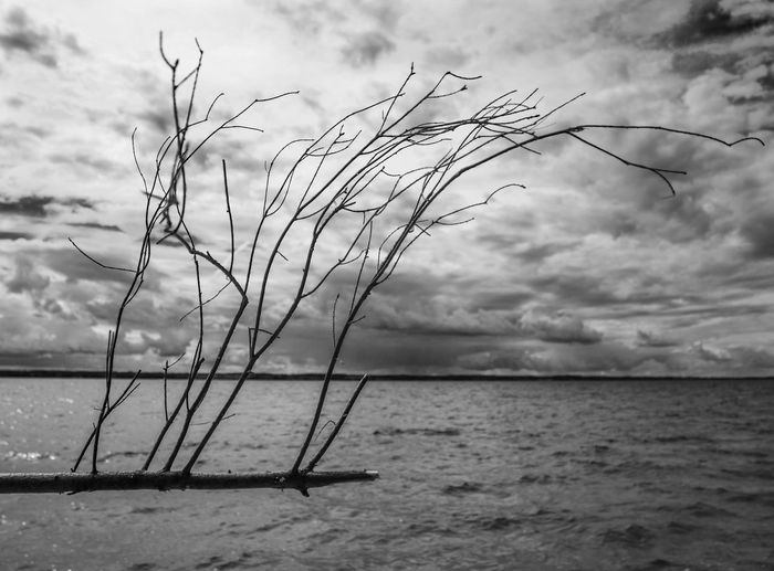 .. Black & White Cloud - Sky Clouds Horizon Lake Outdoors Sky Tree Branch Against The Lake Tree Branches Against The Sky Water EyeEmNewHere