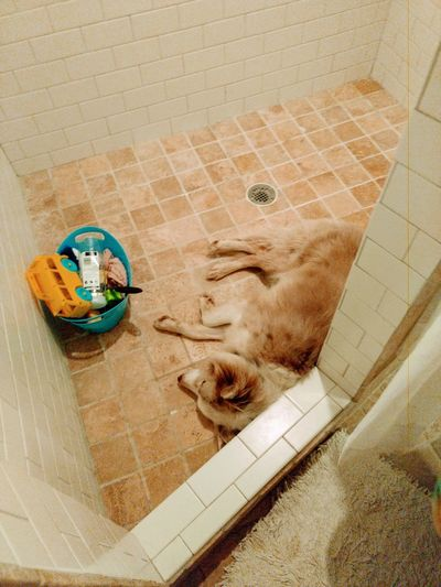 Dogs With Storm Issues Sleeping In The Shower Pets Dogs Shower Water High Angle View Close-up