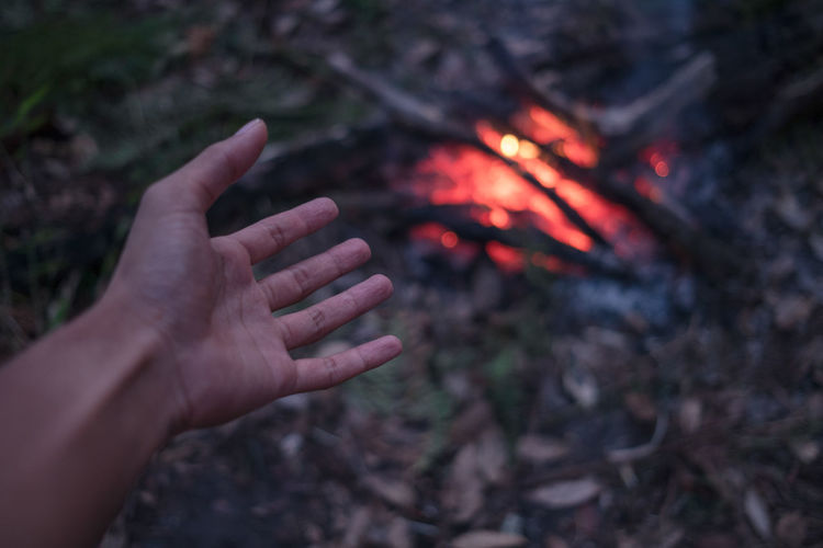 The adult man warms hands around the campfire in forest. Abstract Campfire Wood Lifestyles Land Outdoors Body Part Leisure Activity Finger Human Finger Bonfire One Person Real People Hand Nature Human Body Part Fire Heat - Temperature Fire - Natural Phenomenon Burning Human Hand Flame Focus On Foreground